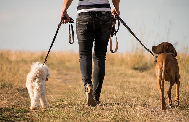 Dog Walking by Carol